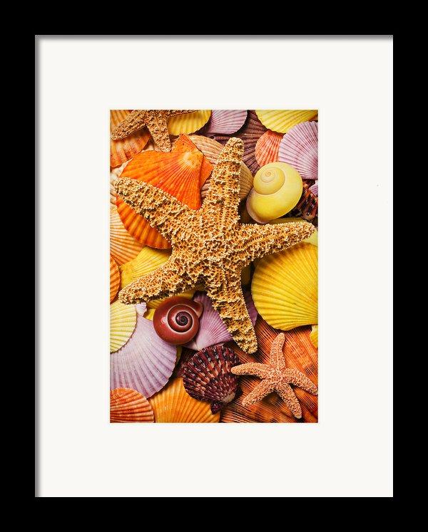 Starfish And Seashells  Framed Print By Garry Gay