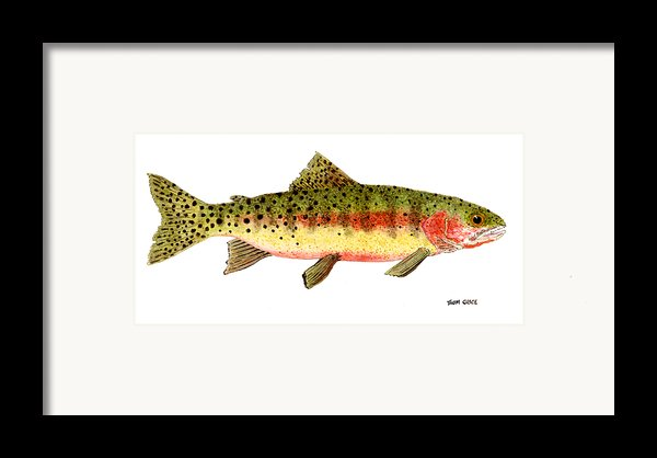 Study Of A Greenback Cutthroat Trout Framed Print By Thom Glace