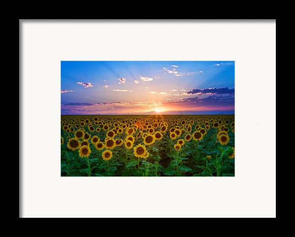 Sunflower Framed Print By Hansrico Photography