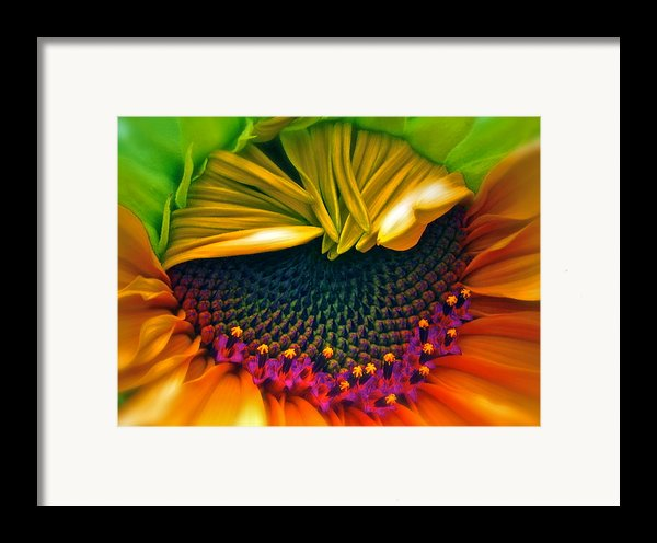 Sunflower Smoothie Framed Print By Gwyn Newcombe