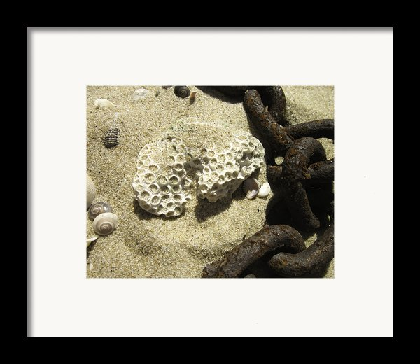 The Chain And The Fossil Framed Print By Trish Tritz