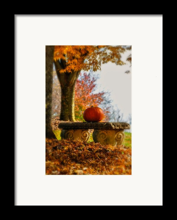 The Last Pumpkin Framed Print By Lois Bryan