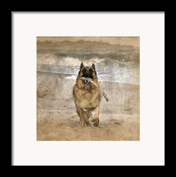 The Retrieve Framed Print By Angie Tirado