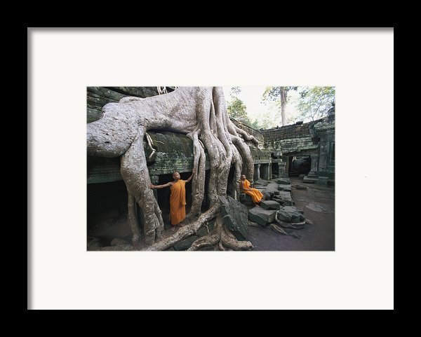 The Roots Of A Strangler Fig Creep Framed Print By Paul Chesley