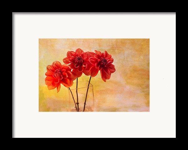 Three Orange Dahlias Framed Print By Rebecca Cozart