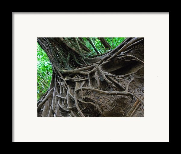 Tree From Manoa Falls Framed Print By Elizabeth Hoskinson