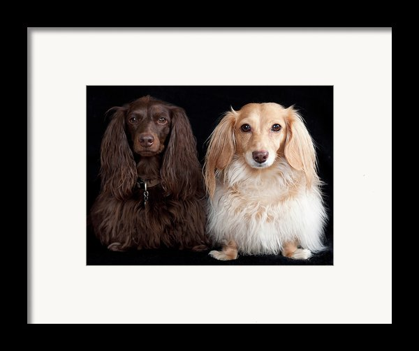 Two Dachshunds Framed Print By Doxieone Photography