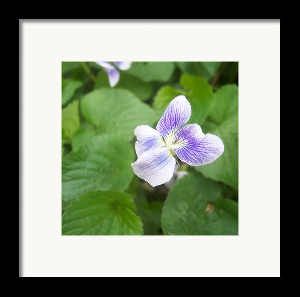 Violet 1 Framed Print By Anna Villarreal Garbis
