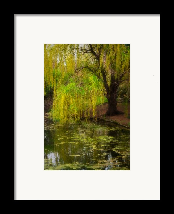 Weeping Pond Framed Print By Fred Lassmann
