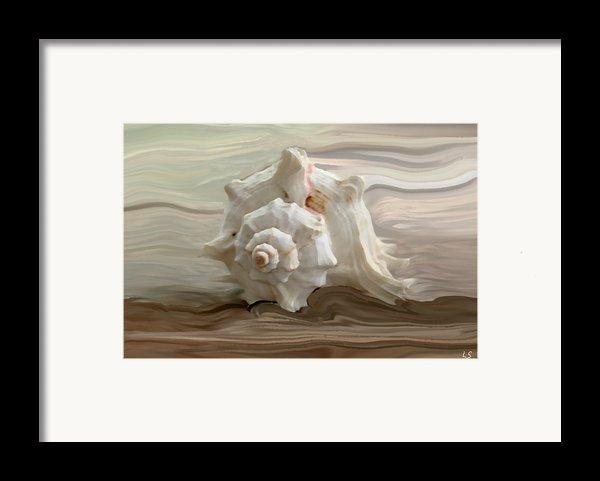 White Shell Framed Print By Linda Sannuti