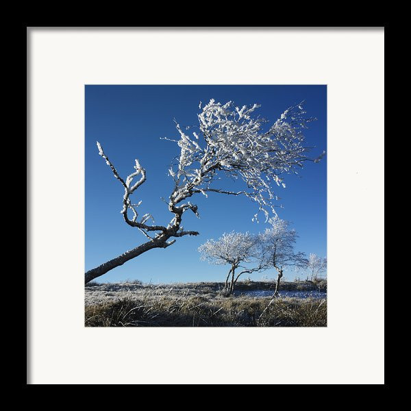 Winter Tree. Framed Print By Bernard Jaubert