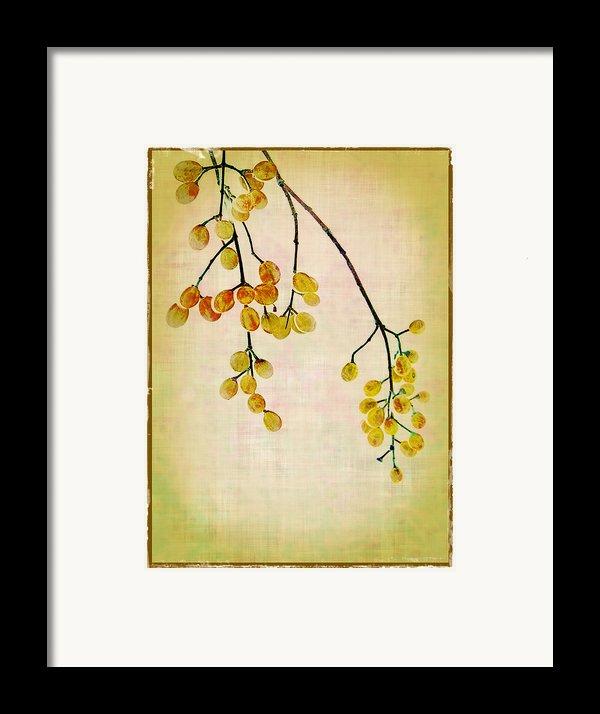 Yellow Berries Framed Print By Judi Bagwell